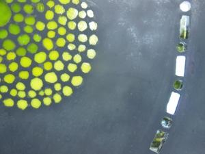 mosaïque béton petit pois(800x600)